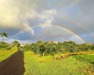 ucc hawaii kona coffee farm